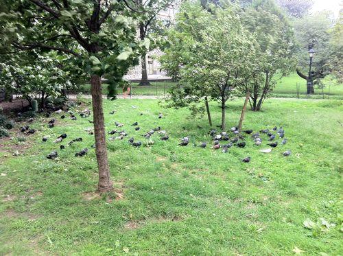 Hurricane pigeons